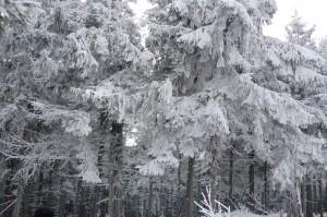 Снег на Тростяне. Славское на Новый Год
